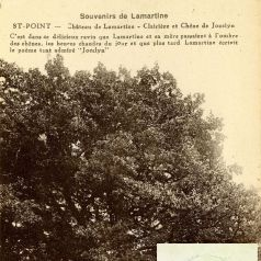 Le ch�ne Lamartine � Saint-Point (6 Fi 9359) et portrait du po�te en 1828 (2 Fi 2/43)
